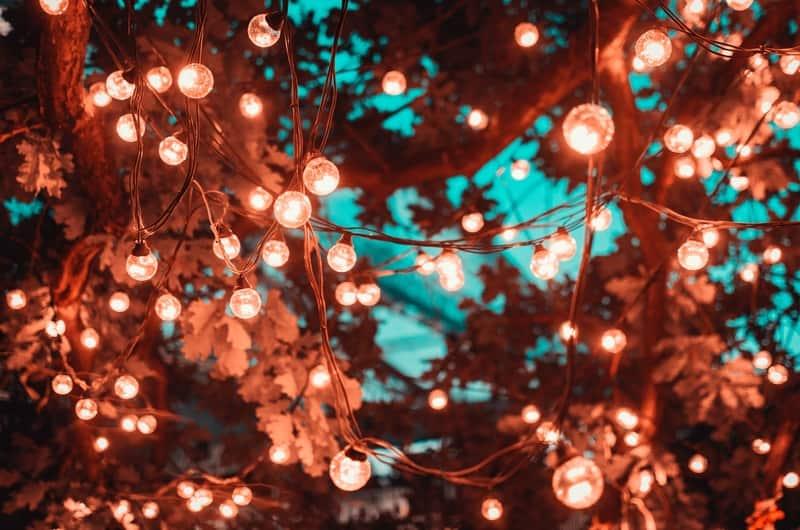 tree with solar fairy lights