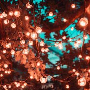 solar fairy lights decorating a tree