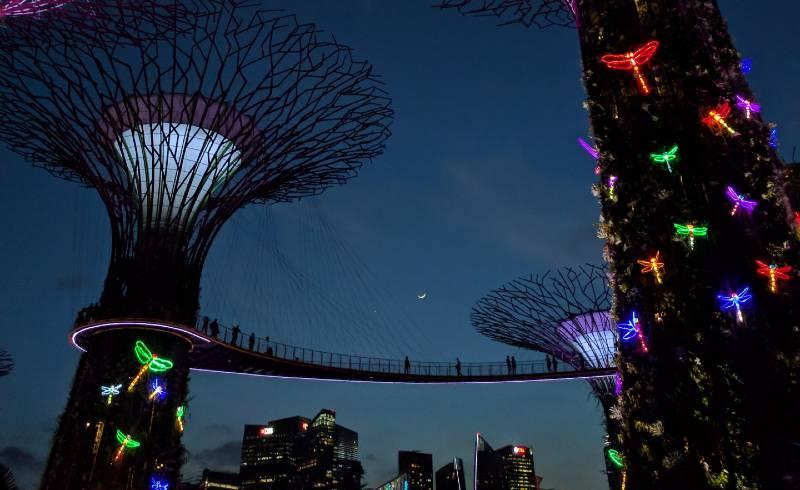 best solar dragonfly lights