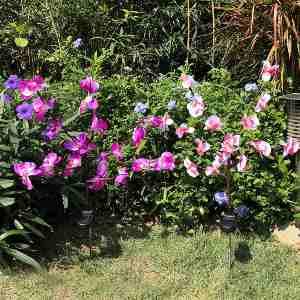 best solar lights for flower beds